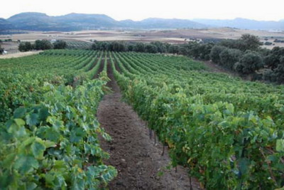 3 Fincas with vineyards, winery and hotel in Malaga