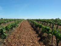 Vineyard and winery for sale in Leon, Spain