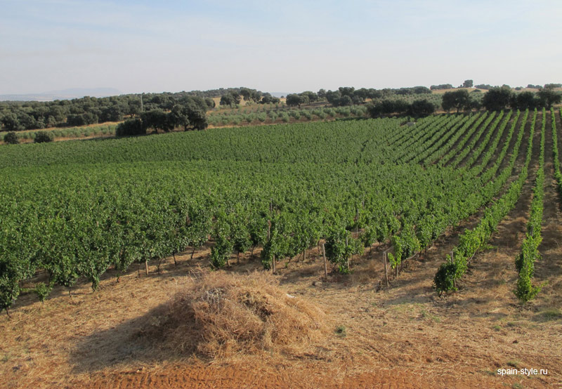 Vineyard, Vineyard and winery for sale in Malaga