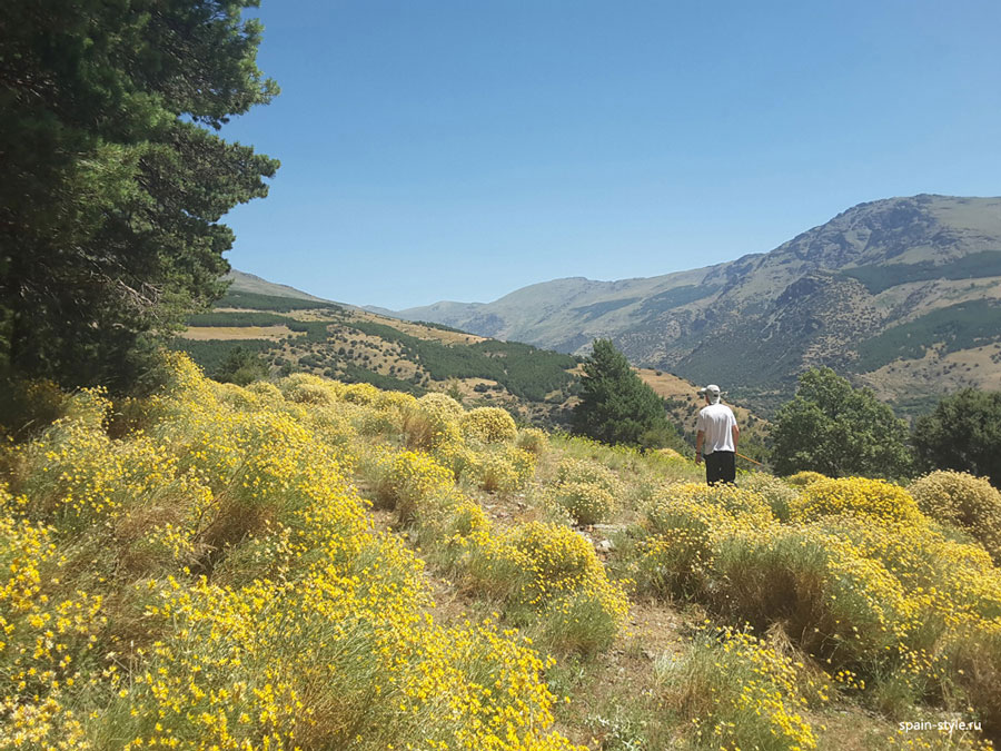 Honey grass,    Country house with  7 ha land in the Sierra Nevada National Park